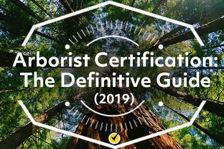 Arborist Certification The Definitive Guide